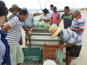 Jericoacoara Brazil Fish Market_Ofstehage